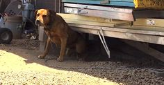 Man Saves A 'Vicious' Chained Dog From A Life Of Cruelty via LittleThings.com