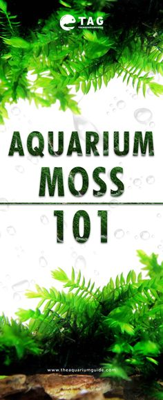 There are many types of aquarium moss that you can use in your freshwater aquariums . - moss are There are many types of aquarium moss that you can use in your freshwater aquariums. Mark Heerdes Aquarium T