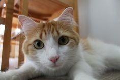 #cat #pet