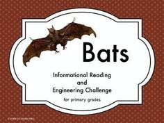 """This is great science  2 page informational reading passage about bats.  It is paired with a """"make a bat STEM challenge"""".  This aligns to the Next Generation Science standards.  There are three graphic organizers for independent follow-up work after the r"""