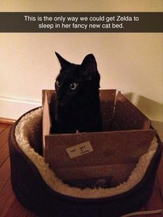 Funny Animal Pictures Of The Day - 30 Pics | I'm telling you people....forget the cat beds, condos, and toys and just give them a box or two or three. They'll be thrilled and you'll save yourself time, money, and frustration.
