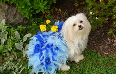 Size Small Showgirl Halloween Pageant Dog Costume