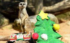 Standing guard: Don't open 'til Christmas!