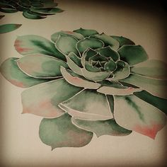 succulent sketch - Google Search