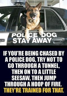 K9 police > good work boys and girls! #dogs #pets #GermanShepherds Facebook.com/sodoggonefunny