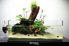 """GÉNESIS"""" - Aquascape By DendroAcua"""
