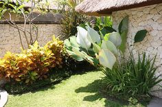 Tropical Garden Plant Bed Idea | Flickr - Photo Sharing! (Banana, EE? )