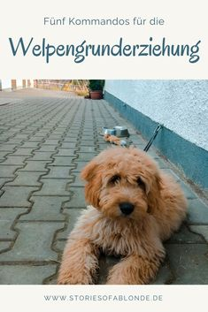 Die ersten 5 Grundkommandos für Deinen Welpen – Stories of a Blonde What is the basic puppy education like? What does a puppy have to learn right from the start? Find out what the most important basic commands are and how to teach them to your puppy! Puppy Care, Pet Care, Cute Puppies, Dogs And Puppies, Pet Dogs, Dog Cat, Doggies, Food Dog, K Om