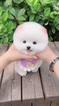 Cute Wild Animals, Cute Little Animals, Cute Funny Animals, Animals Beautiful, Cute Baby Puppies, Super Cute Puppies, Cute Animal Videos, Cute Animal Pictures, Cute Funny Babies