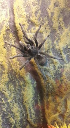 . Spider, Insects, Number, Animals, Female, Collection, Animais, Animales, Animaux