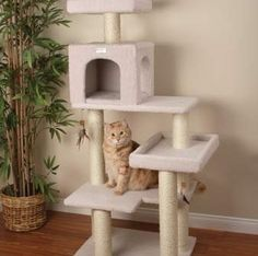 Petco Premium cat tree review #cattower - More about Cat Tower at - Catsincare.com!