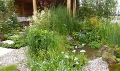 A pond designed for wildlife with shallow sides and plant cover around the outside of the water