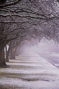 Purple Winter Snow
