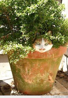 植木ネコ…