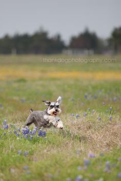 atticus and abby   dallas dog photography » thank Dog. photography
