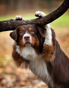 Dog leaning on tree branch