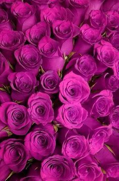 Love for roses.. Always