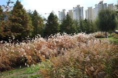 가을 양평유수지의 모습