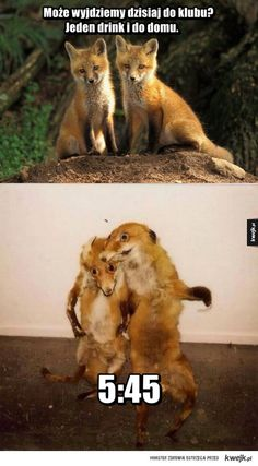 Może wyjdziemy dzisiaj do klubu?Go home fox your drunk Memes Humor, Funny School Jokes, Funny Jokes, Laugh Or Die, Funny Animals, Cute Animals, Funny Pictures Can't Stop Laughing, Dark Art Drawings, Cute Cats And Dogs