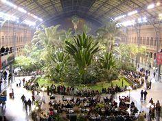 Arboretum (tropical garden) in dry Madrid at Atocha Station