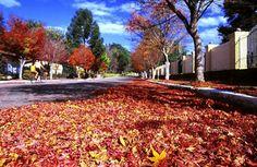 Autumn in Gramado, RS, Brasil