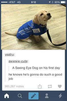 "He looks so determined and like ""I will not fail you!"" #DogTumblr"