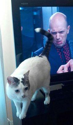 FOK.nl / Specials / 25 hilarisch getimed katten