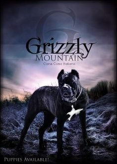 Grizzly Mountain Cane Corso
