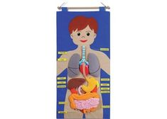 Large felt body chart showing the major organs.Use this with pupils to understand the placement of organs within the body. Science Activities, Activities For Kids, Biology Science Fair Projects, Human Body Science, Body Chart, Science Classroom, Kids Education, School Projects, Kids Playing