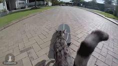 Whoa! That cat skateboards!