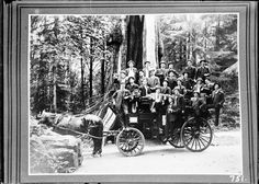 Sightseeing carriage at Hollow Tree. VPL_5491   by Vancouver Public Library…