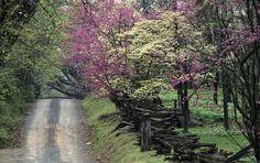 Old Country Roads   Old country road in rural Virginia - photo by Ken Garrett