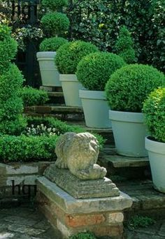 topiary buxus spheres in painted containers on steps - great idea!