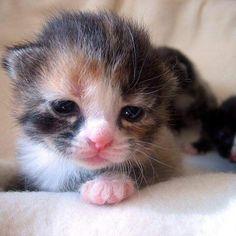 Precious newborn kitten