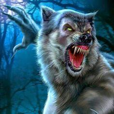 Lone werewolf
