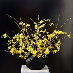 Keep it simple ... I know a lot of women who don't like yellow. Dont't know why? I love all colours ... #spring #flowers #clausdalby #garden #bouquet - forsythia