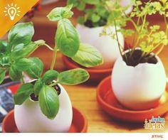 Já pensou em cultivar plantas em cascas de ovo? Elas são ótimas fontes de cálcio para as mudas e podem ser enterradas para continuar o plantio no jardim.