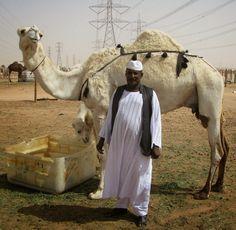 Saudi Arabia: Camel Souk of Riyadh   Minor Sights