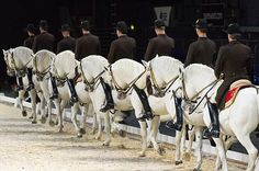 Horse riders from the Spanish Riding School of Vienna perform during their 450th Anniversary tour in London United Kingdom on November 10 2016 The...