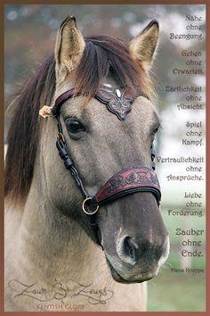 Kentish Glory Unikatszaum Horse Armor, Horse Bridle, Horse Halters, Horse Gear, Friesian Horse, Pretty Horses, Horse Love, Beautiful Horses, Medieval Horse