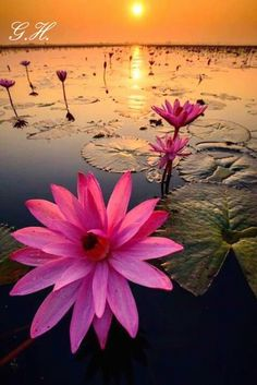 Looks like 'red flare' a tropical night blooming water lily. s jeeva · nice photography Water Flowers, Flowers Nature, Beautiful Flowers, Beautiful Pictures, Nature Plants, Belle Photo, Beautiful World, Beautiful Sunset, Flower Power