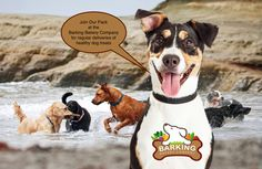 Join Our Pack for monthly deliveries of healthy dog treats