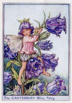 Canterbury Bell Flower Fairy Vintage Print c1950 by TheOldMapShop