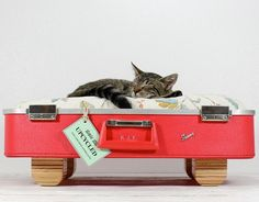 Vintage Suitcase Pet Bed.  This is too awesome.  My favorite.....like small wood legs on this one.
