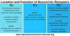 Dysautonomia International: Muscarinic Receptors Research Opportunity!