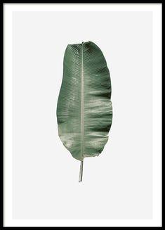 Print with green palm frond | Botany poster | Prints online.