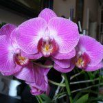 Mini orchideák tartása, ahogy nekem bevált | Balkonada Garden Landscaping, Orchids, Wedding Photography, Landscape, Flowers, Plants, Gardening, Front Yard Landscaping, Scenery