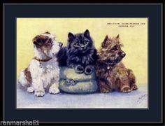 Poster-Print-Sealyham-Cairn-Terrier-Puppy-Dogs-Black-Persian-Kitten-Cat-Art