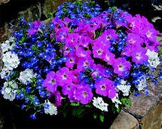 Garden, Flowers, Plants, Balcony, Garten, Lawn And Garden, Gardens, Plant, Gardening