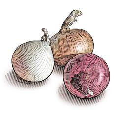 Pen & Ink Illustrations - Food & Beverage - KeithWitmer.com